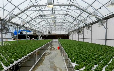 Greenhouse Hidroponik Baja Ringan Berisi Aneka Sayuran Hadir di Belitung
